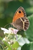 IMG_6051_Spanish_Gatekeeper