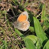 IMG_7233_Small_Heath