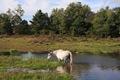 IMG_7486_Water_Pony