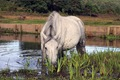 IMG_7491_Water_Pony