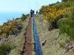 Madeira_day3_levada2