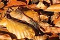 J01_0603 Common Darters in autumn
