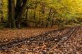 _MG_3889 Woodland Track